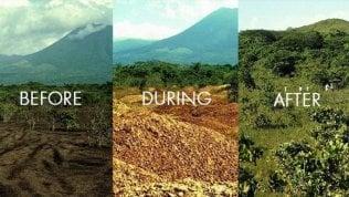"""Il miracolo delle arance abbandonate in Costarica. """"Così da un terreno morto è nata una foresta"""""""